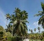 Voyager aux Seychelles / S'isoler au bout du monde, sur les plages paradisiaques des Seychelles, rencontrer les tortues géantes de Saint-Pierre, apprendre à pêcher avec des locaux le temps, plongée unique accompagnés de tortues à Coco Islande...  Les Seychelles n'attendent que vous !