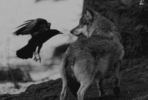 white wolf, black raven | sh / nix woolsey / edward flanders
