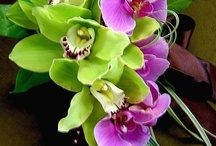Orchids4Octogon
