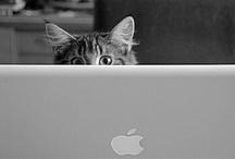 MacBook / by iHeartApple2