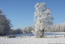 Winter / L'Hiver