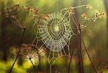 Autumn / L'Automne