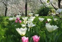 Spring / Le Printemps