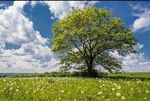 Trees / L'Arbre