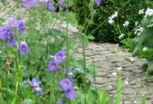Garden paths / Do not go where the path may lead, go instead where there is no path and leave a trail - Ralph Waldo Emerson