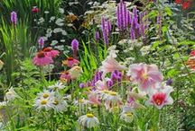 Garden Dreams ~ Cottage gardens, borders & details / Gardens: borders and details. Please follow my other garden board as well: Garden Dreams ~ House & Garden / by Helena Rentmeester