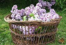 Baskets / Le panier