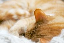 Cats dreaming / Cats are even sweeter when they're asleep <3