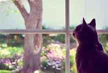 Cats & Windows / Le chat et la fenêtre  / by Helena Rentmeester