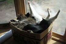 Cats & Boxes / Le chat et la boîte