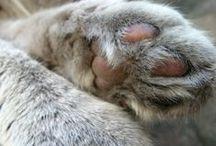 Cat paws / Les pattes des chats