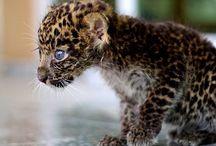Binatang Is Animal / Cuteness overload! / by Christian Simamora