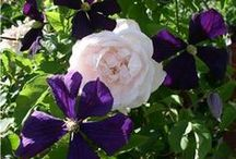 Garden: Pretty combinations / Beautiful and unexpected plant combinations