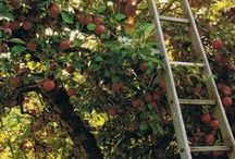 Orchard ~ Verger ~ Obstwiese / Boomgaarden