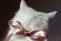 Cats: white / I have a soft spot for white cats <3