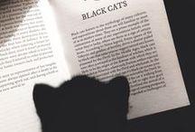 Cats & books / Le chat et le livre.