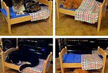 Cats in Doll Beds