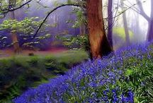 Blue Flower Forest