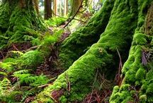 Moss beauty