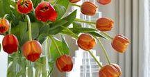 Aurinkoinen oranssai/ Decor