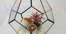 teraryum fanusları / Terrarium, teraryum, minyatür bahçe, peri bahçesi, masal bahçesi ve benzeri çalışmalarda kullanılan fanus, pod ve saksılar