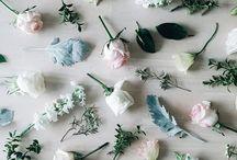 las flores delicadas