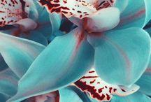 Flowers / by Carmen Pionk