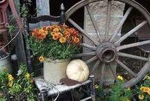 Gardening / by LoriAnne Walsh Melton