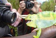 How to climb Uganda's Rwenzori Mountains. 9 day hike diary, packing list & travel advice / Trekking the Rwenzori Mountains, Uganda - read the full story here http://muzungubloguganda.com/2015/05/rwenzori-trekking-ruwenzori/