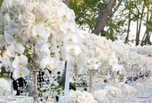 Centerpieces | Weddings / by Serendipity Weddings & Nails