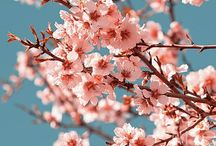 Blossom   Flowers / Beauty of blossom flowers and trees