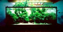 Aquarium and Fish Tank Inspiration! / All that we can find!  #fish #tank #aquarium #aquatic #plants #underwater #aquascaping #fishes #aqua #aquariums #goals #stand #themes #decorations #ideas #inspiration #motivation #howto #beginners #decorations #freshwater #home #theraputic #relaxing #calming #meditate #design #apartment #office #classroom #garden #neat #creative #hobby #kids #men #women #saltwater #freshwater #rocks #driftwood #beautiful #pets #animals #accessories #display #plants #new #wood #nature #fishtanks #aqua #scape #Co2