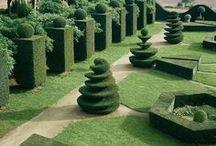 TOPIARY - dekorativní strom / Tvarované okrasné dřeviny zvané TOPIARY můžete nalézt v mnoha dnešních zahradách. Jde o zahradnické umění, které vypadá skutečně nádherně a dřevina střižená do určitého tvaru se může stát krásnou dominantou vaší zahrady.