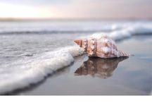 Beach Photography Inspiration / by Ginni @nderson