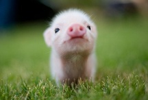 cute animals / by addison