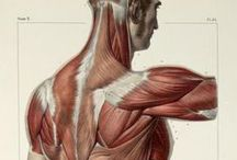 Anatomy for artists ;)