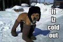 Winter Woof
