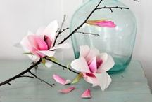 Magnolia / A perennial favorite: charming magnolias graced with a heavenly floral fragrance.