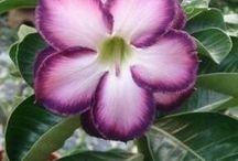 květina jména