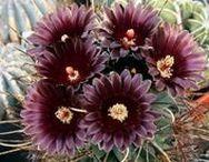 Succulents: Hoya, Cactus, Crassula