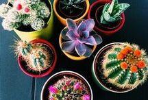 | Plants |