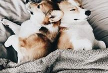 | Dogs |