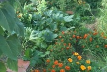 Gardens and Gardening / Though I don't have much of a green thumb, I like to imagine I do. http://www.georginayoungellis.com/