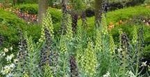 Flora / Plants