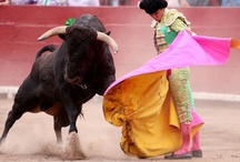 Bullfight / Bullfighting is the only art in which the artist is in danger of death and in which the degree of brilliance in the performance is left to the fighter's honor. ~Ernest Hemingway / by Sara Conklin