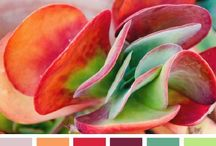 Colour Inspiration from Nature / Using nature to inspire colour combinations