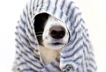 Dogs / by Kelly Douglas