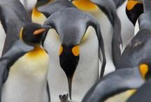 Things I Love - Penguins / My daughter Clare wants a penguin party for her 3rd birthday...