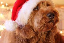 Christmas Pets / by Kelly Douglas