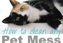 Tips | Pets / by Kelly Douglas
